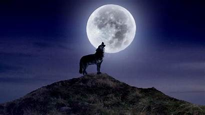 Howling Wolf Moon Wallpapers Wolves Background Widescreen