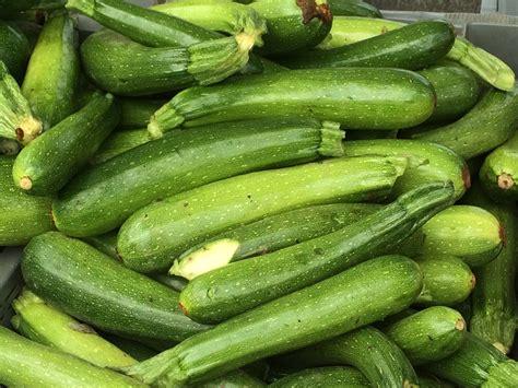7 Health Benefits Of Zucchini