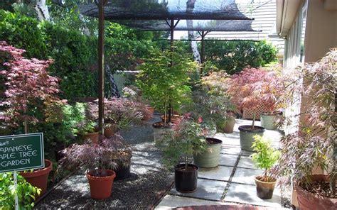 Japanese Container Garden Gardenality