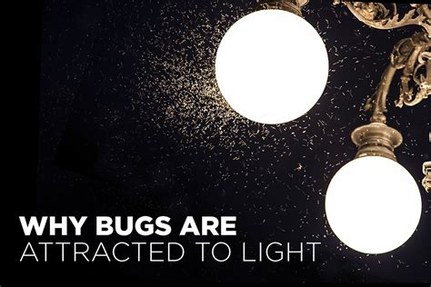 Tamco Why Are Bugs Attracted To Light