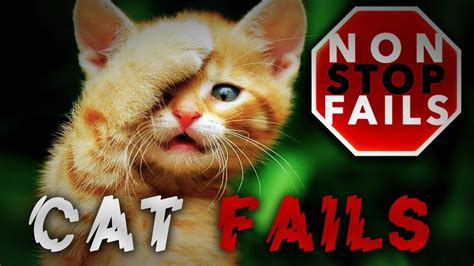 Nonstop Cat Fails  Funny Cat Videos  Cats Being Stupid