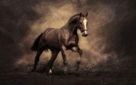 horses famous most wallpapers desktop horse equestrian hd