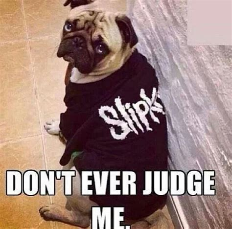 Slipknot Memes - 10 best images about slipknot funny on pinterest kinds of dogs kid and future baby