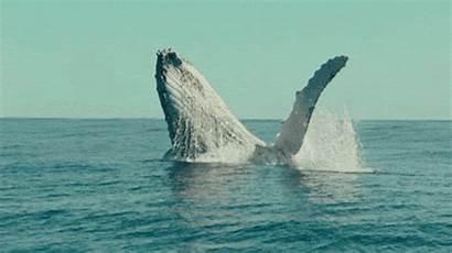 Whale Gifs Whales Hi Animal