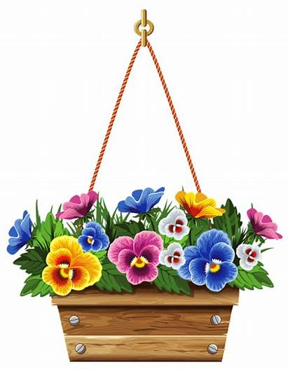 Flower Hanging Clipart Box Basket Vector Violets