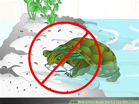 put  sucker fish   tank   turtle  steps