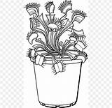 Venus Plant Flytrap Trapping Drawing Line sketch template