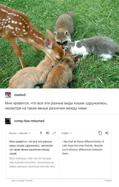 Russian Cat Meme - russian cat translations know your meme