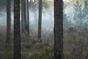 Free, Images, Tree, Nature, Swamp, Wilderness, Light, Plant, Fog, Sunrise, Mist, Sunlight