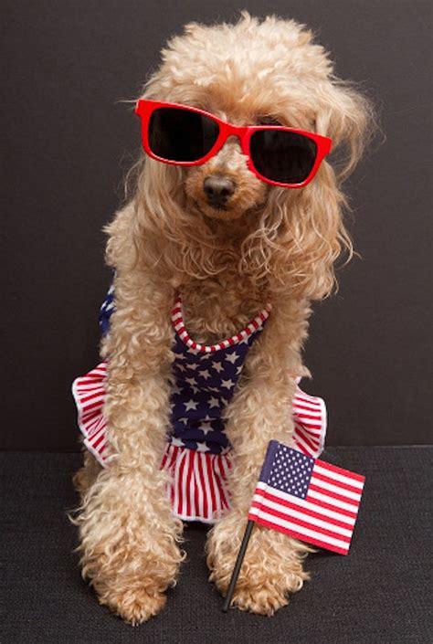 celebrate july   patriotic gifs