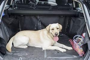 Voiture Pour Chien : comment faire monter son chien en voiture ~ Medecine-chirurgie-esthetiques.com Avis de Voitures