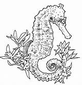 Seahorse Coloring Pages Print sketch template