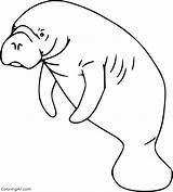 Manatee Coloring Pages sketch template