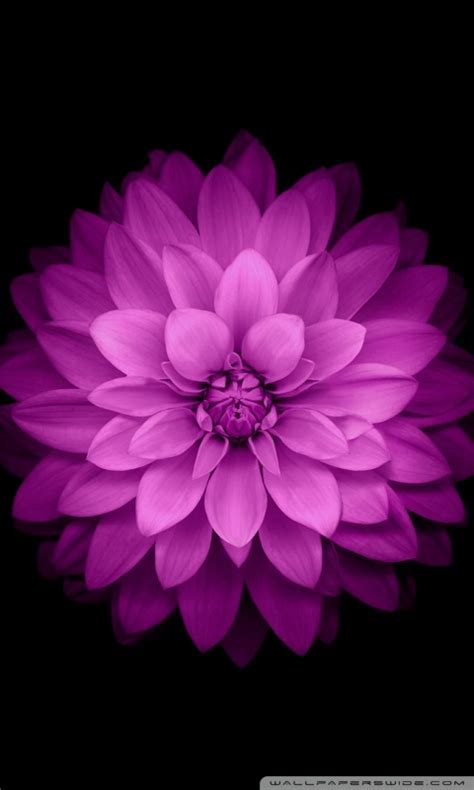 Animated Mobile Phone Wallpapers Flowers - flowers wallpapers for mobile 240x320 impremedia net