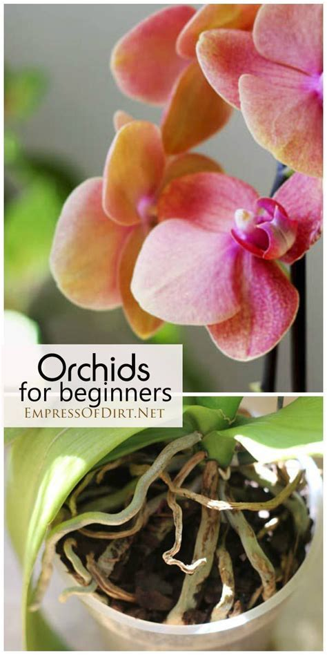care for orchids 241 best images about orchids on pinterest