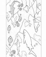 Coloring Aquarium Bay Monterey Sharks Rays Sea Ocean Worksheets sketch template