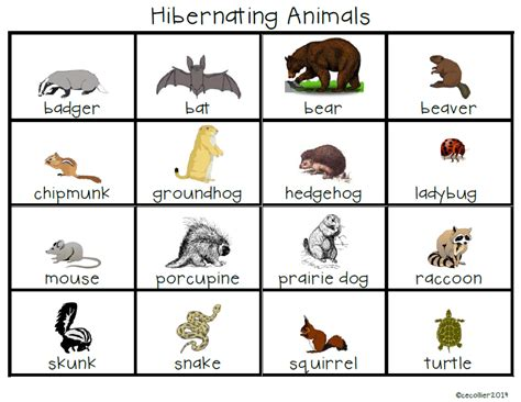 animals hibernate kindergarten about hibernating animals