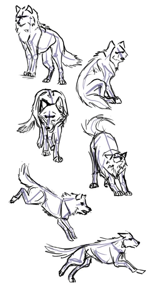 wolf poses   draw  wolf animal drawing reference