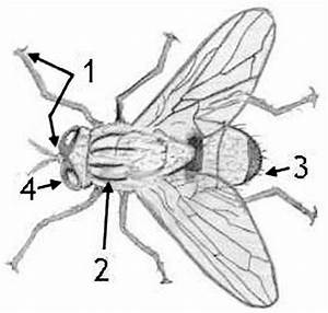 Diagram Of Fly Coloring Page