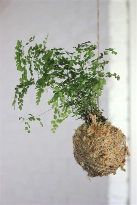 diy project kokedama string garden designsponge