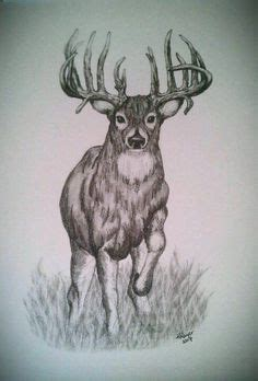 deer sketches images deer sketch deer sketches