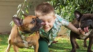 Hundebekleidung Französische Bulldogge : franz sische bulldogge wesen charakter und haltung ~ Frokenaadalensverden.com Haus und Dekorationen