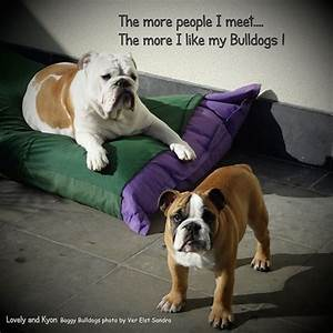 194 best images about Bulldog Quotes on Pinterest
