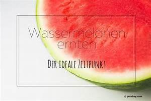 Wann Sind Brombeeren Reif : wassermelonen ernten der ideale zeitpunkt wann sind melonen reif ~ Orissabook.com Haus und Dekorationen