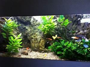 Idee Decoration Aquarium : id e d co aquarium ~ Melissatoandfro.com Idées de Décoration