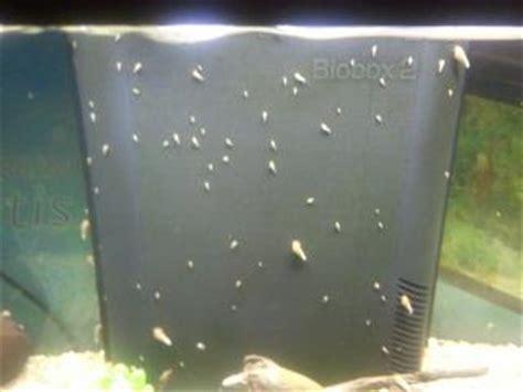 d escargot aquariophilie org