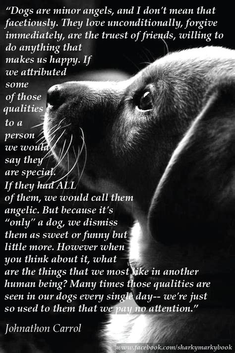 """Inspirational Quote On Dogs From Carroll """"dogs Are Angels. Tumblr Quotes Relationship Goals. Movie Quotes Shawshank Redemption. Happy Quotes Home. Quotes About Love Growing Like A Tree. Valentines Day Quotes Not About Love. Best Friend Quotes Hilarious. Travel Quotes Little Prince. Adventure Running Quotes"""