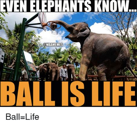 Ball Is Life Meme - 25 best memes about ball is life nba and life ball is life nba and life memes