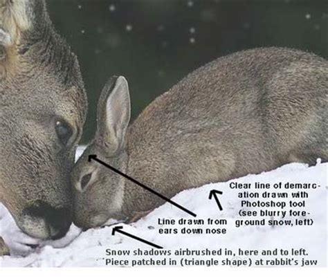 tanja askanicreator    bambi  thumper
