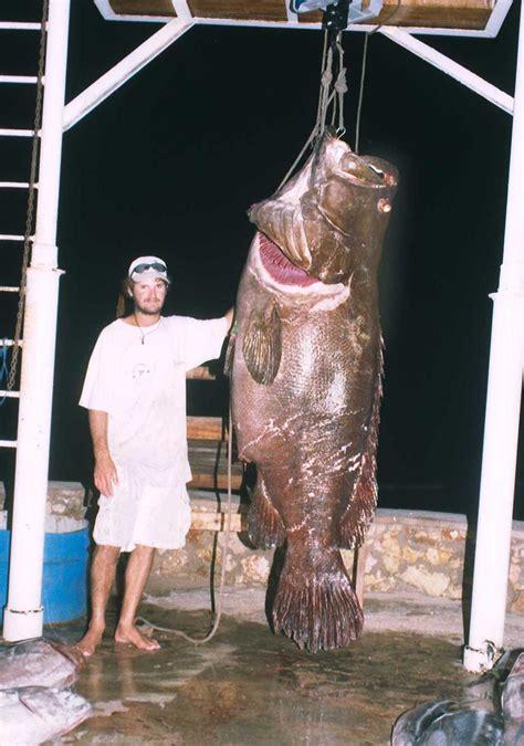 grouper fish biggest giant epinephelus record lanceolatus caught fishing huge largest ever fishes monster massive records pound lb letham tanzania