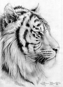 193 best images about big cats on Pinterest | Lion drawing ...