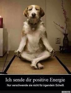 Positive Energie Bilder : die besten 25 niedliche hunde ideen auf pinterest hunde niedliche welpen und welpen ~ Avissmed.com Haus und Dekorationen