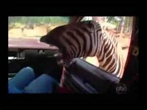 Funniest Animals IN THE WORLD!NEED TO WATCH - YouTube