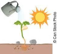 Was Brauchen Pflanzen Zum Wachsen : wachsen pflanzen samen boden wachsen pflanzen samen vektoren illustration suche ~ Frokenaadalensverden.com Haus und Dekorationen