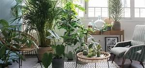 Support Plante Intérieur : bien choisir ses plantes d int rieur quand on n a pas la ~ Teatrodelosmanantiales.com Idées de Décoration
