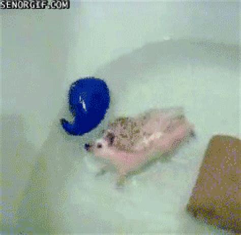 bathtub tub best of week swimming gif by cheezburger find on