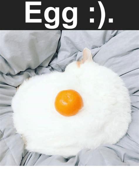 Egg Memes - 25 best memes about egg egg memes