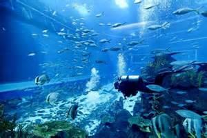 Open Ocean Aquarium