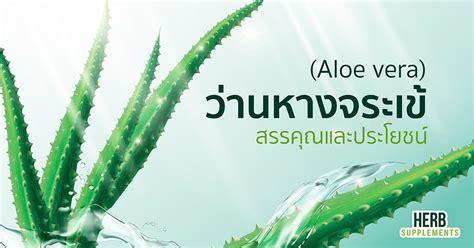 ว่านหางจระเข้ สรรพคุณ และประโยชน์ - www.herbsupplements.co.th