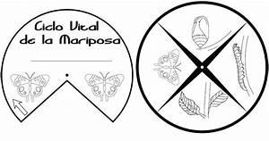 Etapas del ciclo de vida de los animales - Recursos didcticos