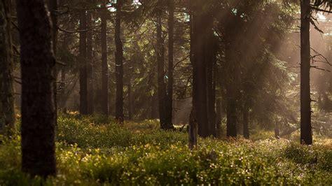 Free Lock Screen Wallpaper Picalls Com Magic Forest By Lukasz Szmigiel