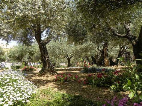 garden of gethsemane two gardens and gethsemane