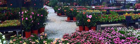 secretaries week flowers delivery denton tx hollys gardens