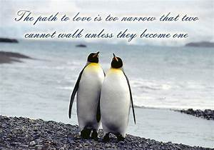 Cute Penguin Quotes. QuotesGram