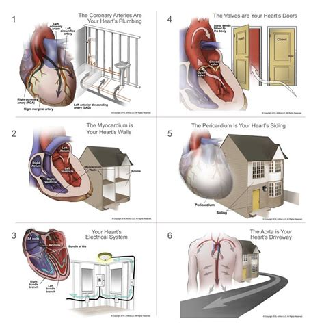 dr aarush manchada   analogy   heart