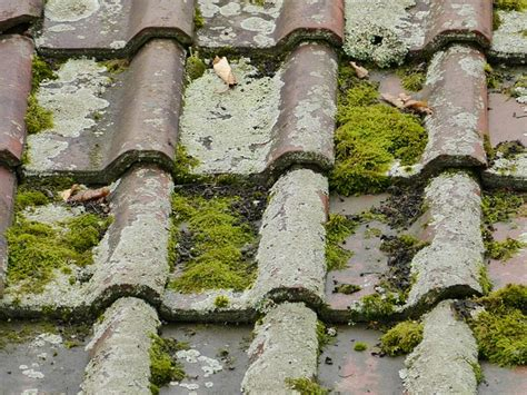 How To Maintain Moss-free Roof Tiles Englert Metal Roofing Usaa Roof Damage Claim Silicone Coating Cleaning Vancouver Wa Erie System Local Repair Nailer Rental Best Quality Shingles